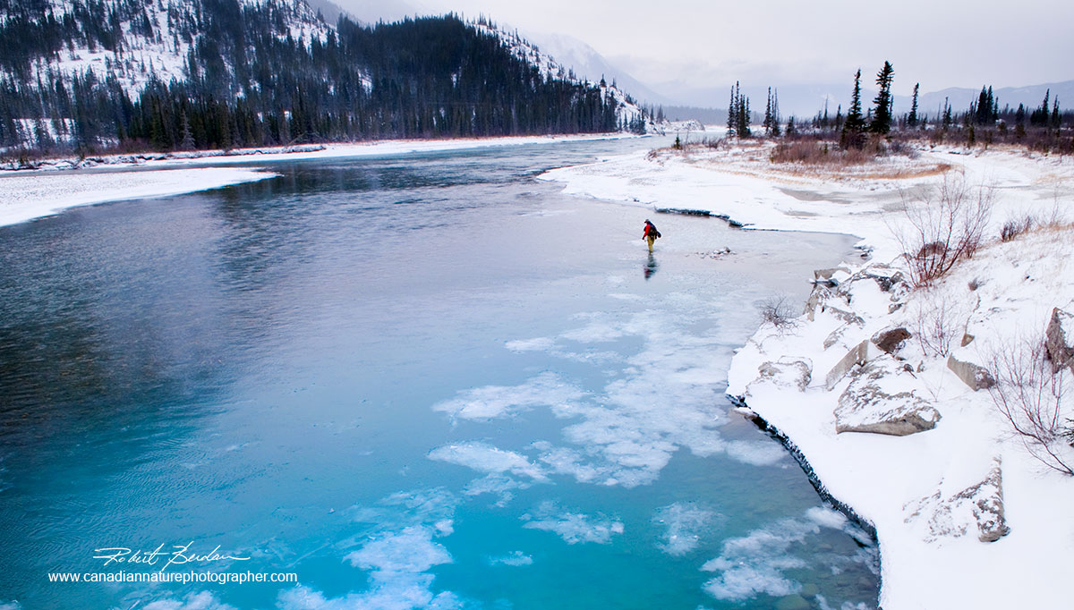 Fly fisherman (Frank Wood) in the Athabasca River in winter, Jasper National Park, AB Robert Berdan ©