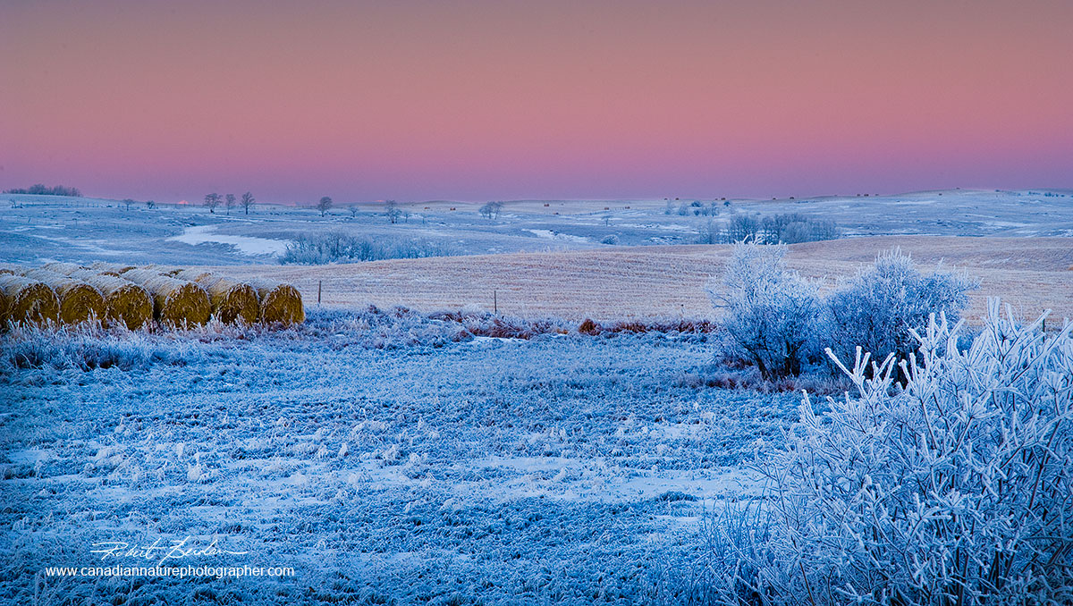 Fields next to Bearspaw road before sunrise with hoar frost covering the fields and trees Robert Berdan ©