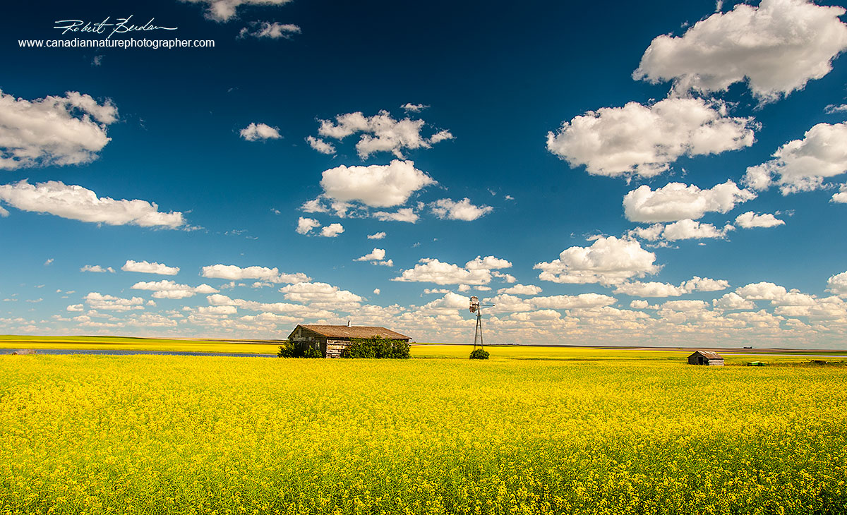 Home stead and canola field on a bright sunny day near Empress, AB by Robert Berdan ©