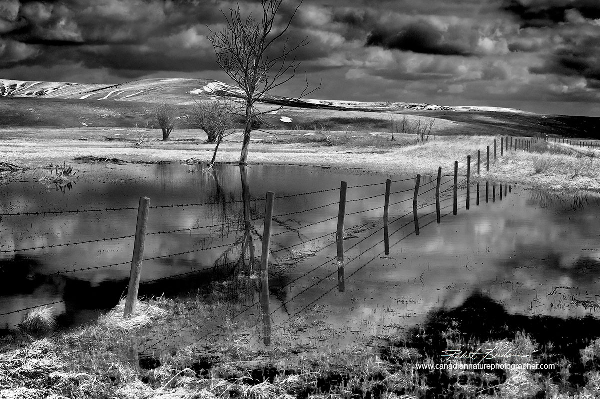 Hills near Nanton in spring with freshly melted now forming ponds black and white photo Robert Berdan ©