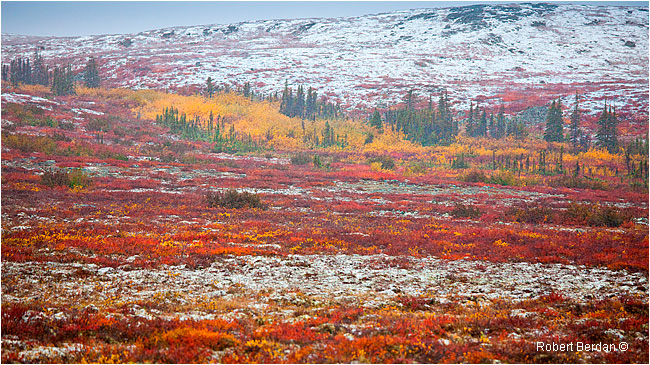 Fresh snow on tundra by Robert Berdan ©
