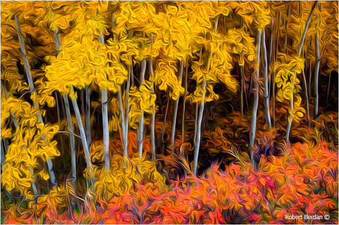 Autumn colors photograph after applying Adobe Photoshop's Oil painting filter by Robert Berdan ©