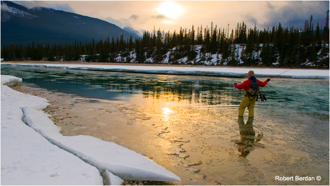 Winter fly fishing on the Athabasca river by Robert Berdan ©