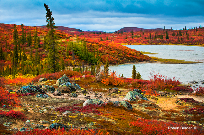 Caribou bay, the barrens, by Robert Berdan ©