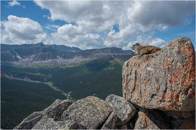 marmot looking over the valley by ghostbearphotography.com
