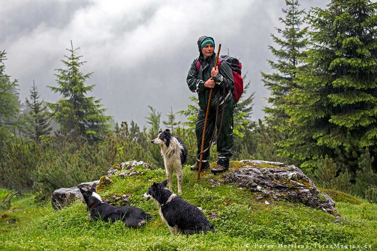 Shepherd Astrid and her three border collie dogs by Peter A. Dettling ©
