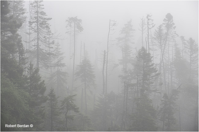 Forest next highway 7was shrouded in fog by Robert Berdan ©