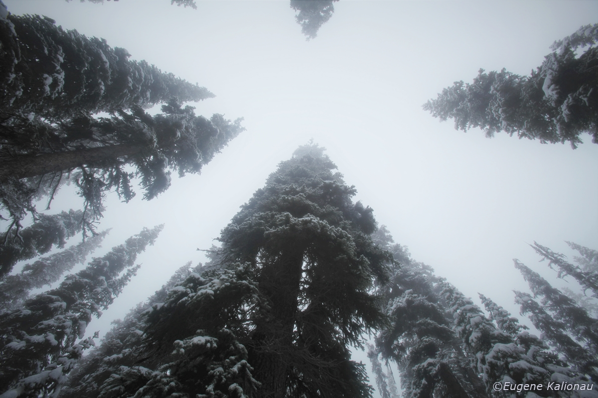 Winte trees and snow by Eugene Kalionau   ©