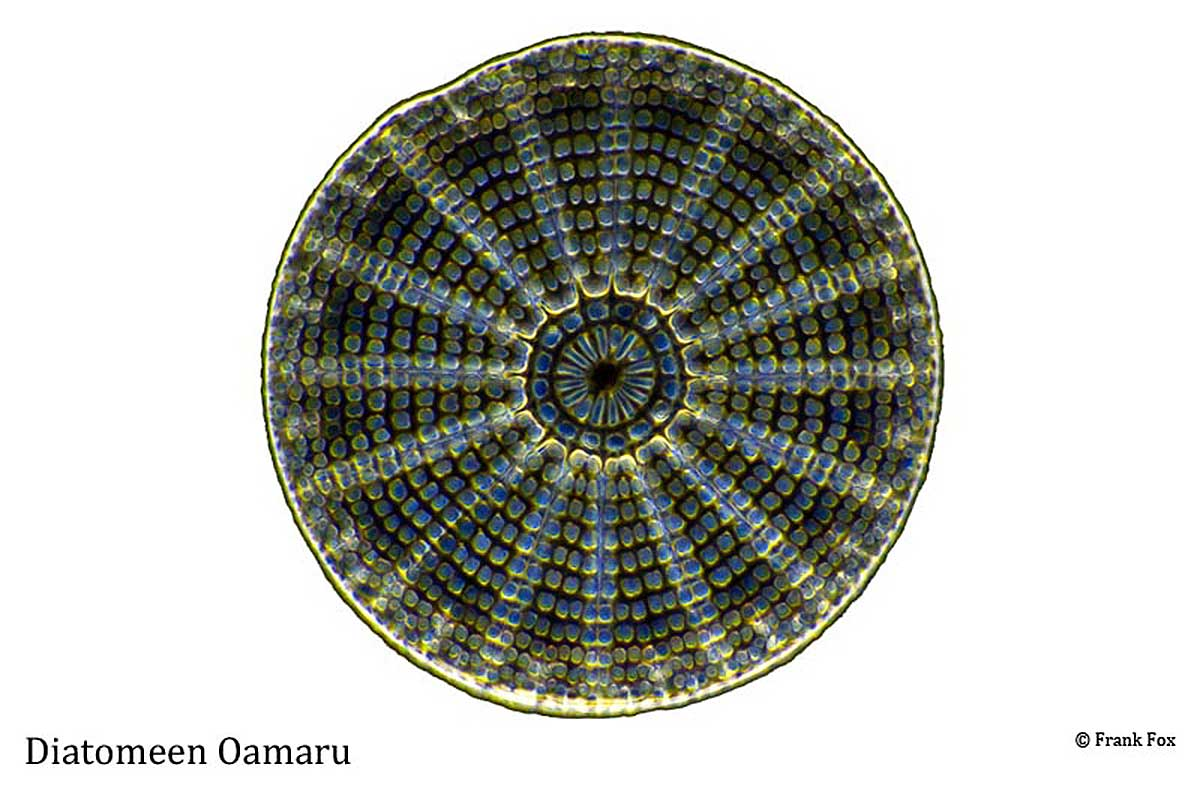Diatom Oamaru by Frank Fox ©