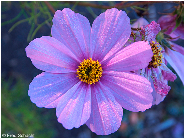 Flower in Silver Springs Park by Fred Schact ○