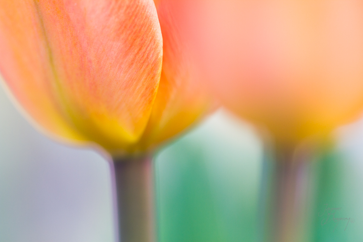 Flower soft focus  by Jaymes Dempsey ©