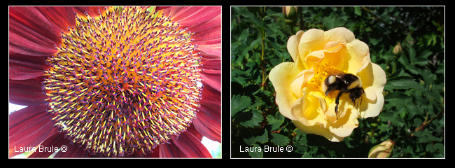 Flowers by Laura Brule ©