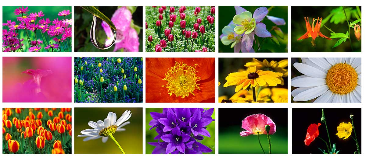 Flower closeups by Robert Berdan ©