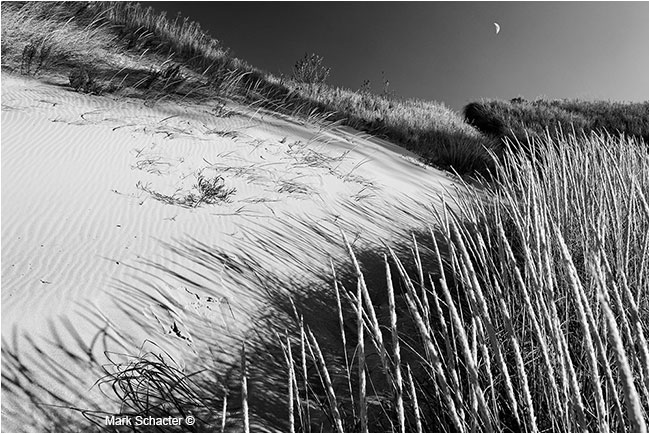 Dune Grass (Beverly Shores, Indiana) by March Schacter ©