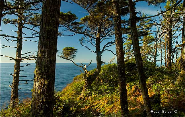 View of Pacific Ocean from the Nootka Trail by Robert Berdan -