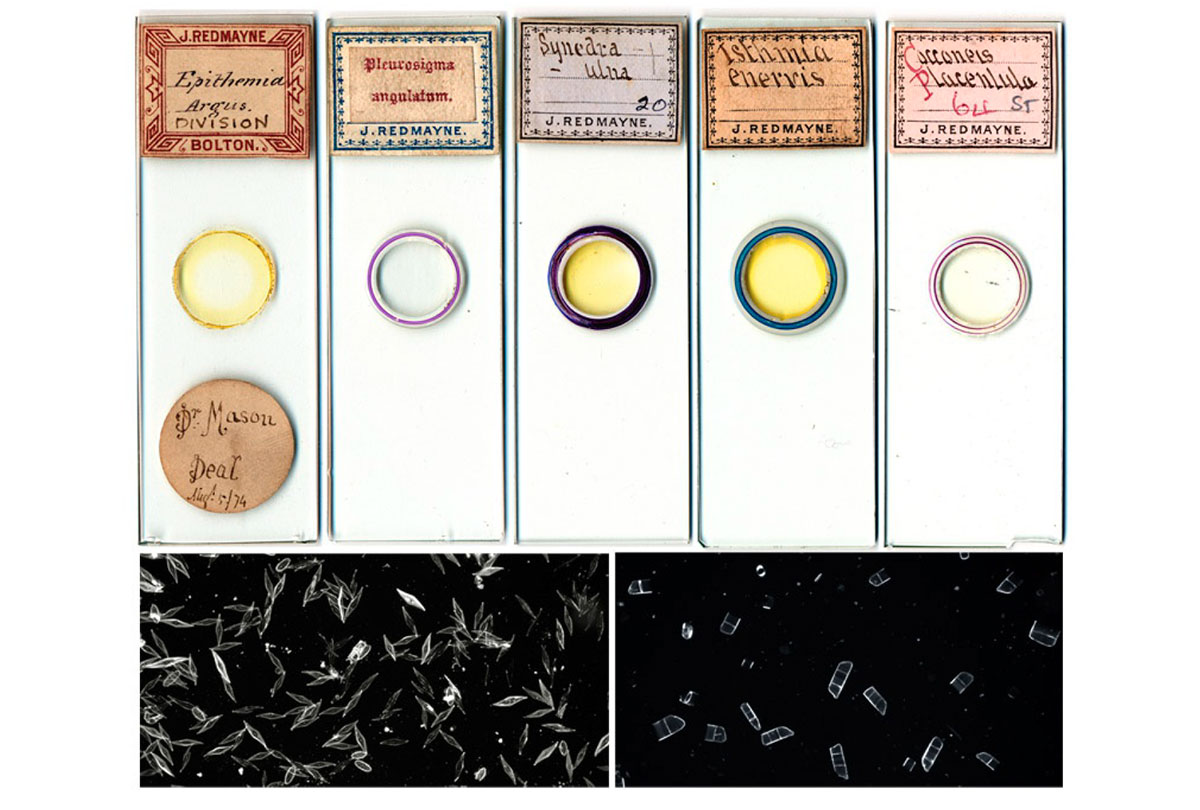 Diatom slides produced by J.T. Redmayne courtsey of Brian Sevenson