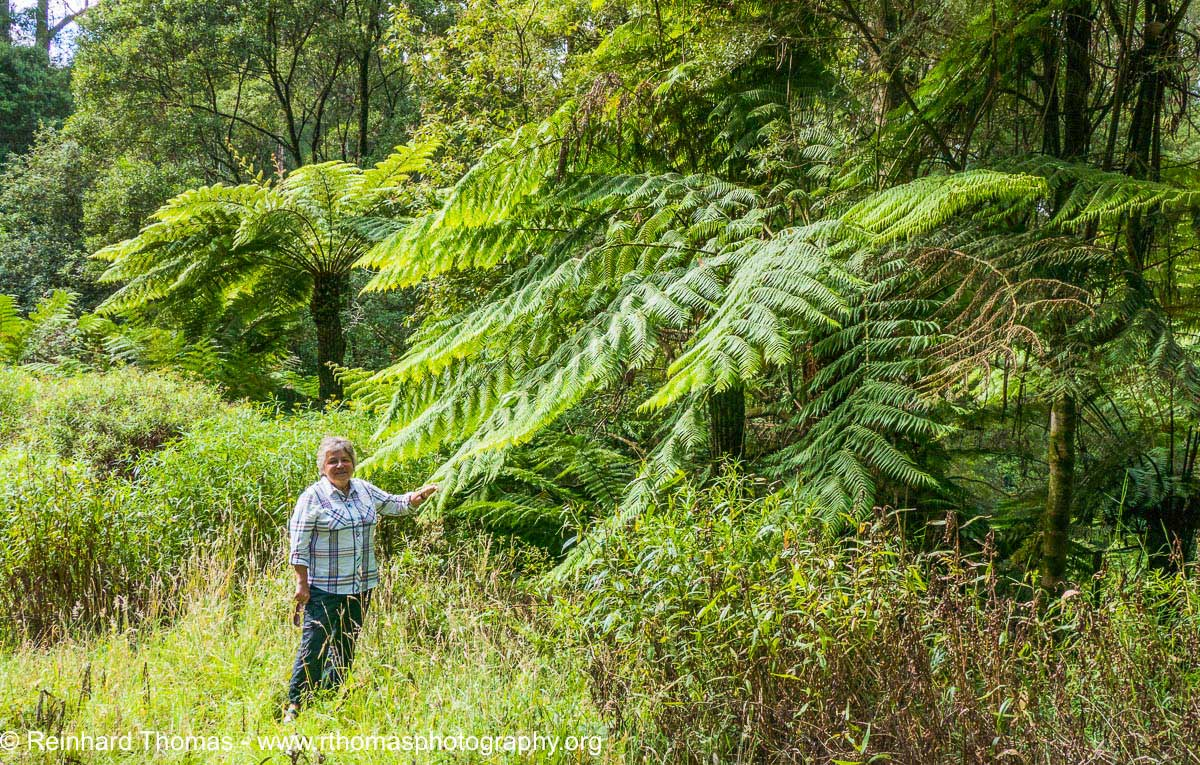 Fern Forest Australia by Reinhard Thomas ©