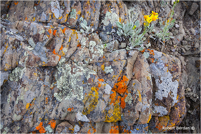 Lichen on rock by Robert Berdan ©