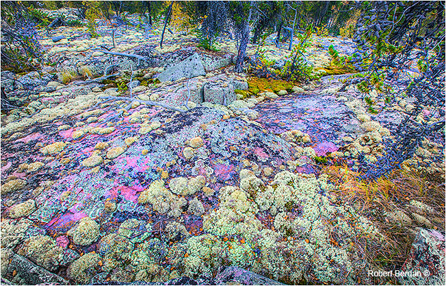 Moss and Lichen on granite in Prelude Territorial Park by Robert Berdan ©