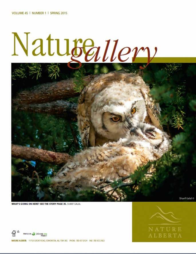 Nature story about owls in Nature Alberta by Sharif Galal