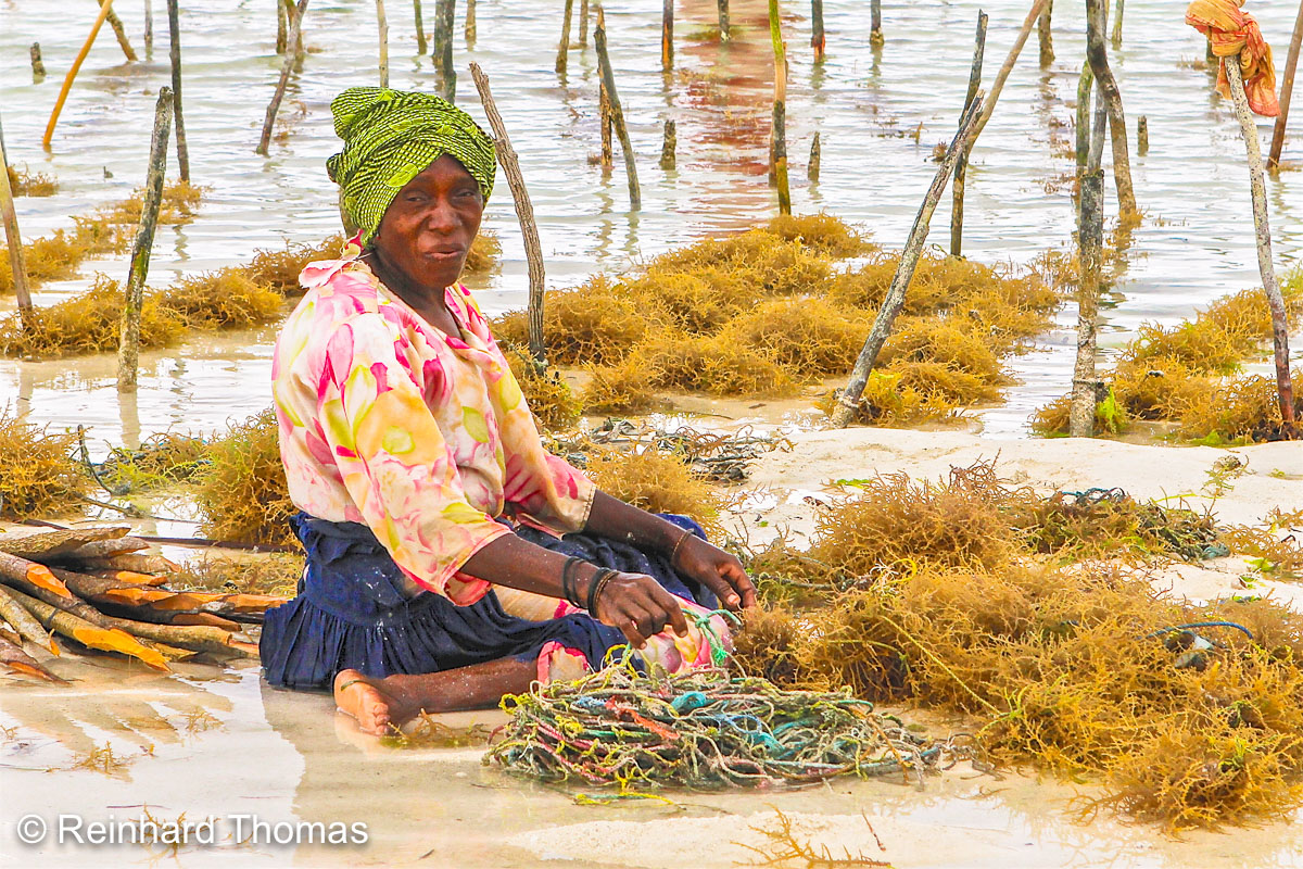 Woman planting Seaweed strings by Reinhard Thomas ©