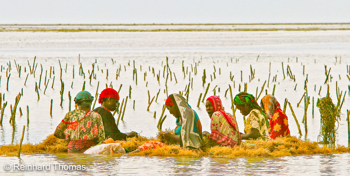 Women working on a seaweed farm. by Reinhard Thomas ©