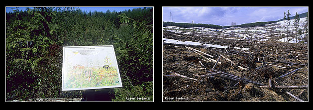 Clearcut forest on Vancouver Island.