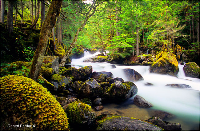 Long exposure of stream in the Rainforest by Robert Berdan ©