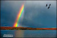Rainbow and crows over Point Lake Northwest Territories by Robert Berdan