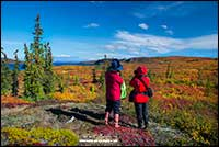 Tourists look over the Tundra in the Northwest Territories Robert Berdan