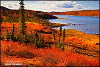 Caribou Bay in autumn attached to Point lake Northwest Territories by Robert Berdan