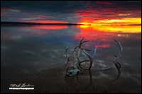 Caribou antlers in Point Lake at sunrise by Robert Berdan
