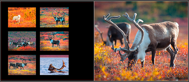 Hangin with the Caribou pages 42-43 by Robert Berdan ©