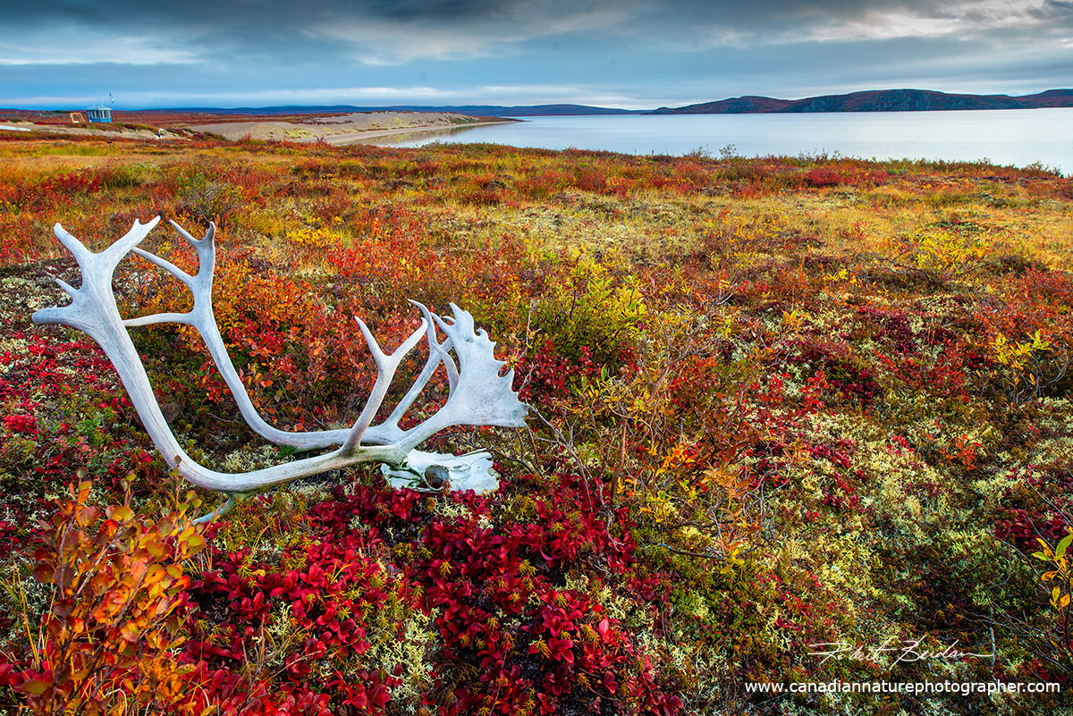 View in front of Point Lake Lodge with a caribou skull and antlers in the foreground by Robert Berdan ©