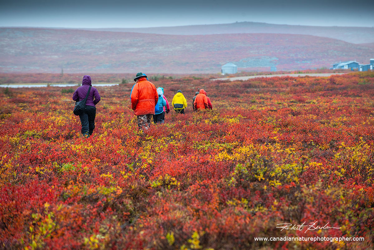 The first group of photographers heading back to the cabins after a short walk on the tundra by Robert Berdan ©
