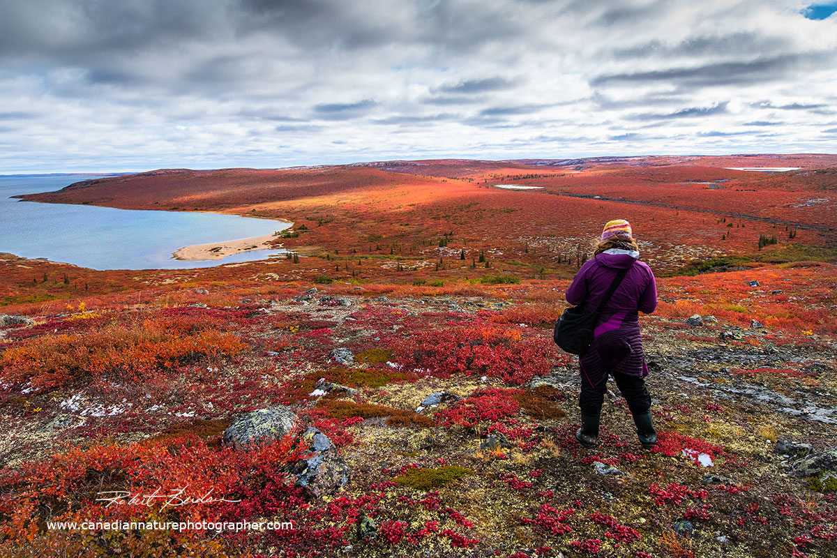 Tawna Brown surveys the tundra before taking some landscape photographs by Robert Berdan ©