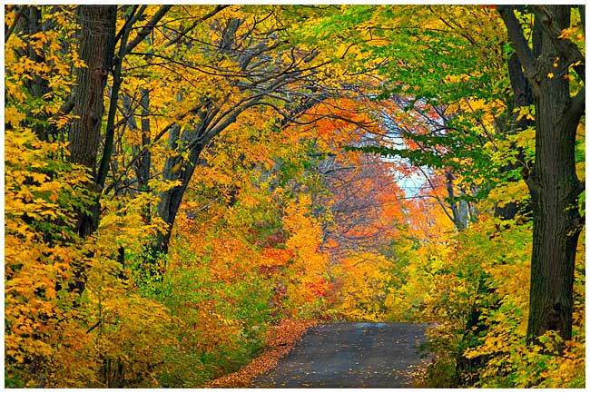 Autumn scene with road by Robert Berdan
