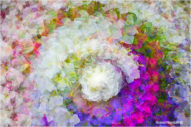 Multiple twirl photography of flowers by Robert Berdan ©