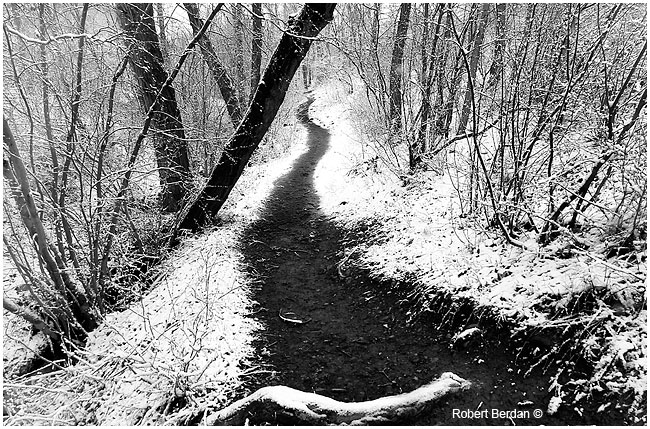 Path after fresh snow in black and white by Robert Berdan ©
