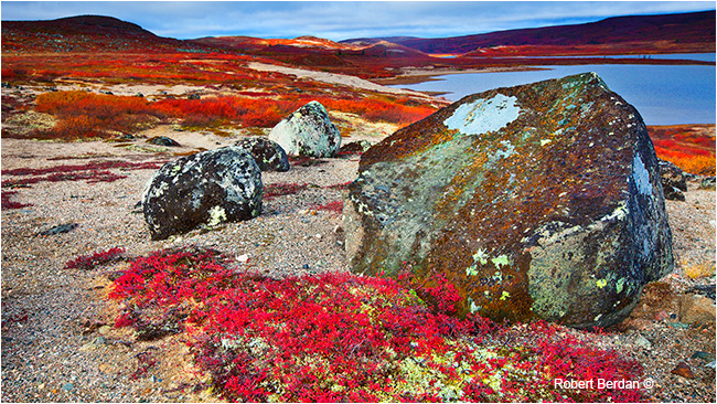 Tundra habitat, Esker Bay off Point Lake, NWT by Robert Berdan ©