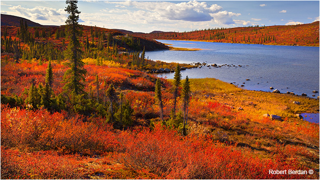 Caribou bay NWT by Robert Berdan ©