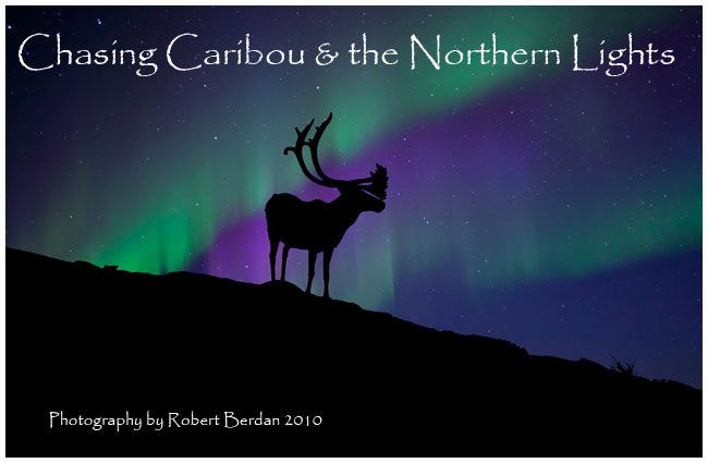caribou silhoutte and the aurora by Robert Berdan ©