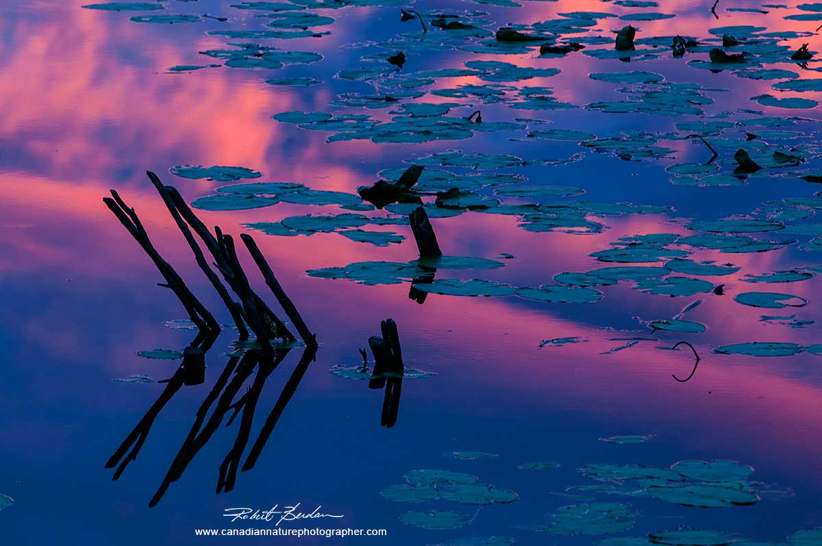 Pastel colours reflected in this pond suggest a tranquil feeling by Robert Berdan ©
