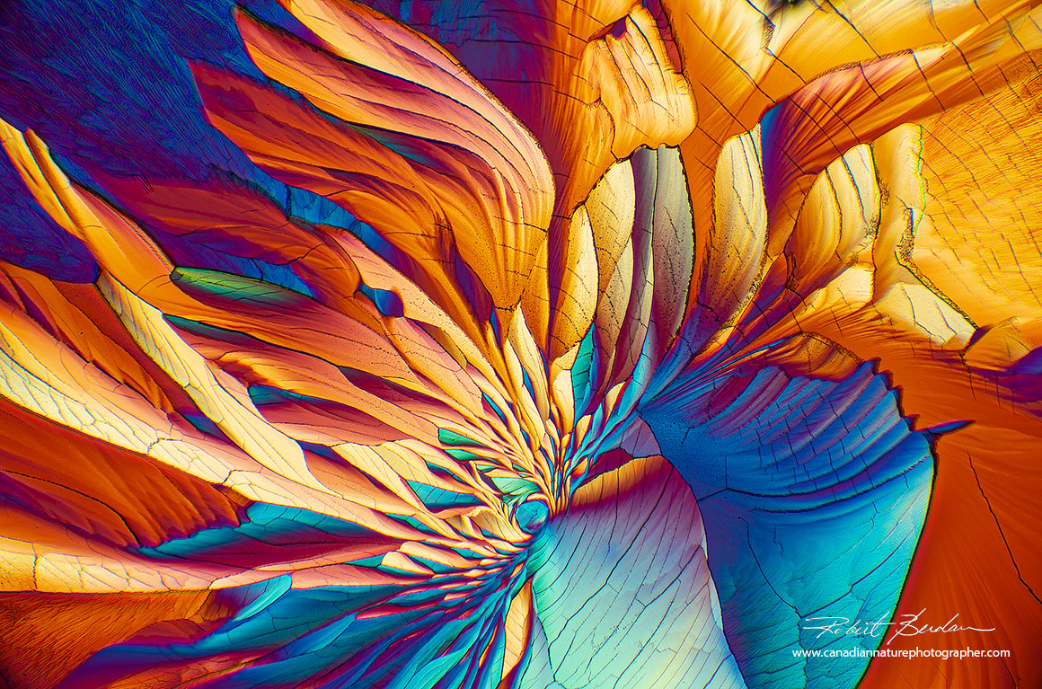 Beta-Alanine and Glutamine 100X polarized light microcopy showing crystalsresembling flower petals Robert Berdan ©