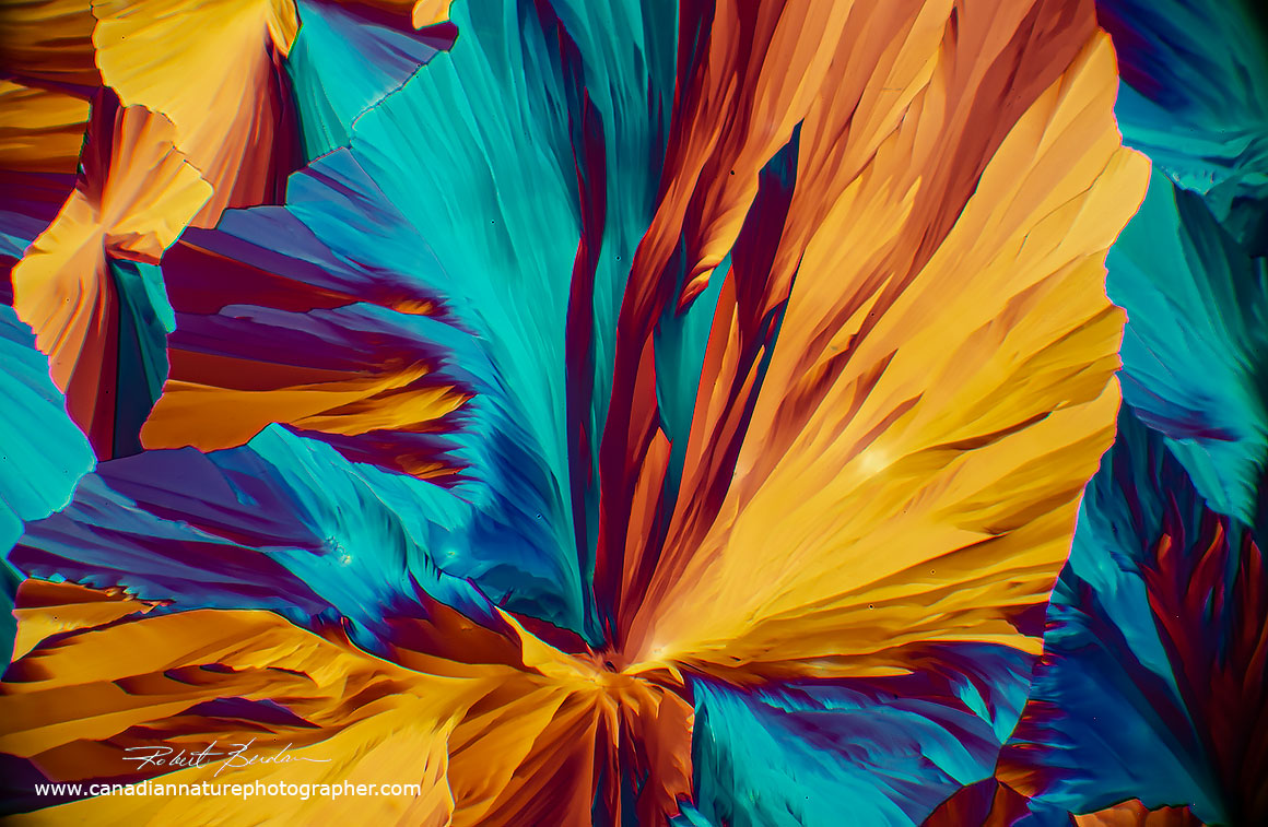 Saccharine (a sweetener or sugar substitute) when viewed by polarized light microscopy Robert Berdan ©