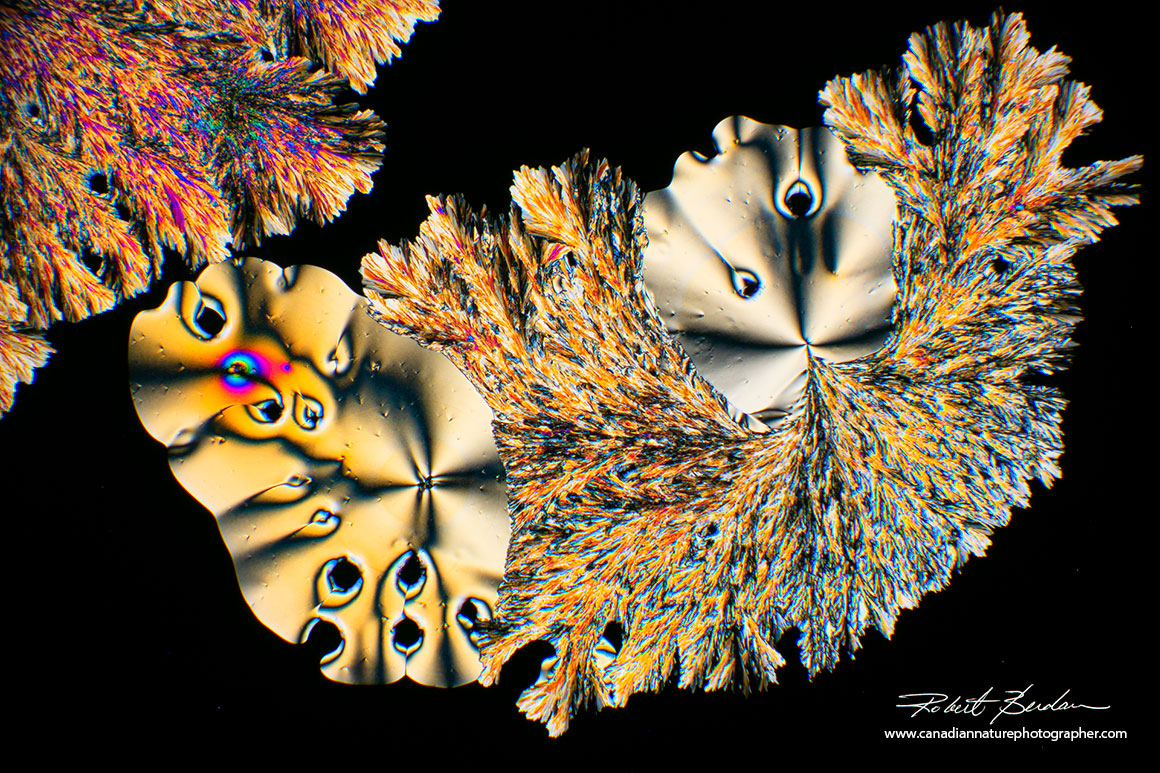 Vitamin C crystals by polarized light microscopy showing a variety of shapes, colours and textures. 100X Polarized light microscopy Robert Berdan ©