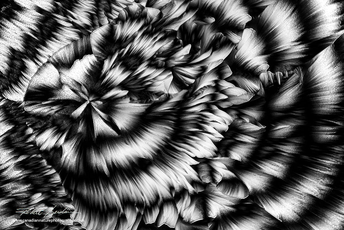 Crystals of Beta-Alanine and Glutamine in black and white by Polarizing microscopy 40X Robert Berdan ©