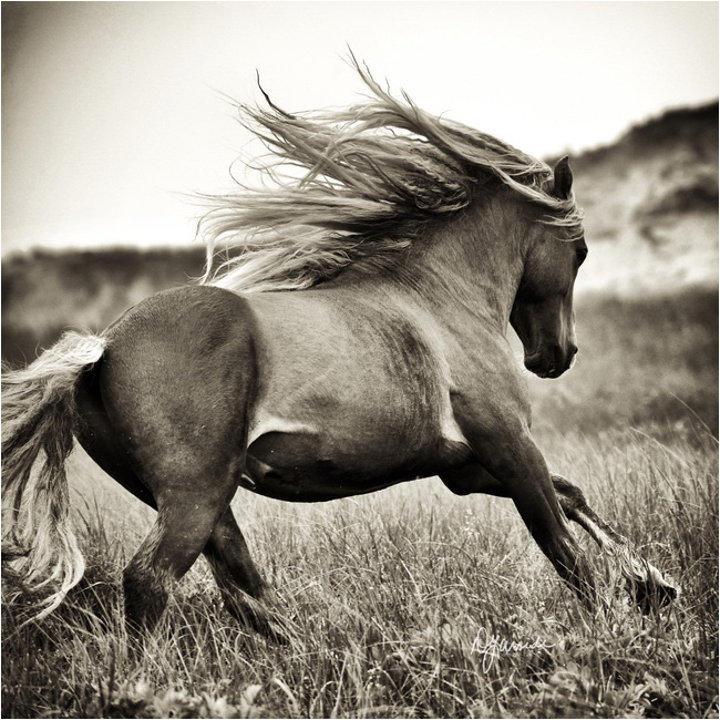 Power and Speed horse by Deb Garside ©