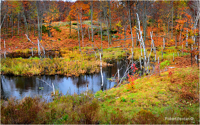 Pond and Forest by Karl Berdan ©