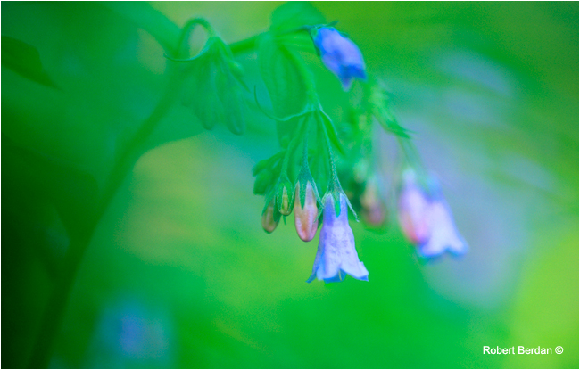 Flowers with creative vignetting effectg by Robert Berdan